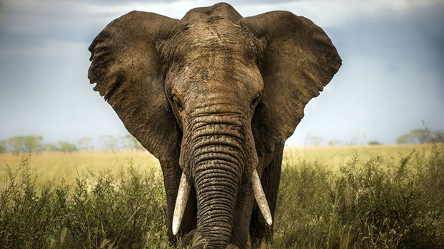 Amazing fact about elephant in hindi