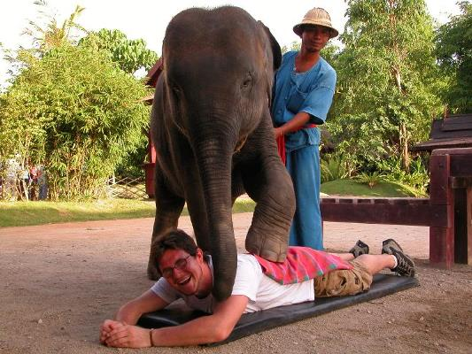 Elephant massage in Thailand
